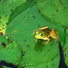 blacklick park frog by donald beynon