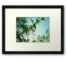 After a Quick Rain Came Framed Print