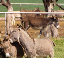 Donkey Rescue Sticker