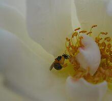 A wisp of a wasp by MarianBendeth