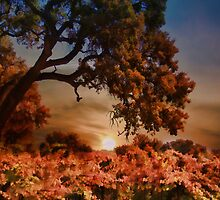 Sunset Oaktree and Vineyard In Fall by Stephanie Laird