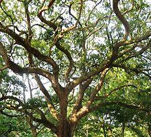 Deo's Tree Soul by Rusty Gentry