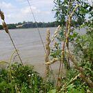 Through the Wheat by takemeawaycn