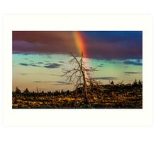 Rainbows-n-old Juniper Art Print