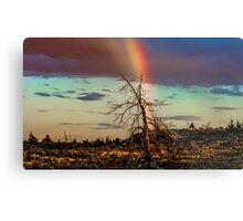 Rainbows-n-old Juniper Metal Print