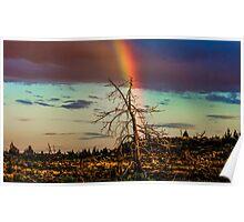 Rainbows-n-old Juniper Poster