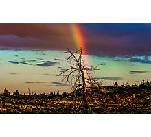 Rainbows-n-old Juniper Photographic Print