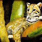 Ocelot awaking from a nap by David M Scott
