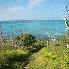 Ancient Cedars, Hog Bay Park Shoreline, Bermuda by Amaterasu