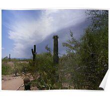 Saguaros Standing Guard Poster