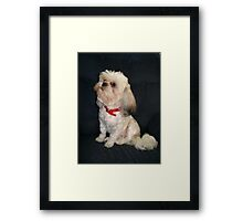 The Red Collar Framed Print