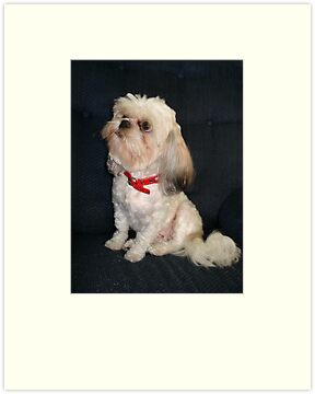 The Red Collar by May Lattanzio