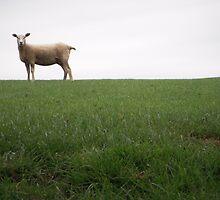 Ovis Aries by DanBoldy