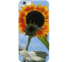 Backlit Sunflower and Bud iPhone Case/Skin