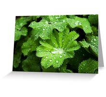 Lady's Mantle - bejeweled Greeting Card