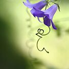 Tendrils and  Bells by Donna-R