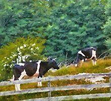 Cows - Moo  by Mike  Savad