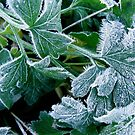 Iced Parsley Anyone? by LouJay