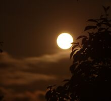 Unadulterated Full Moon by David Lilly
