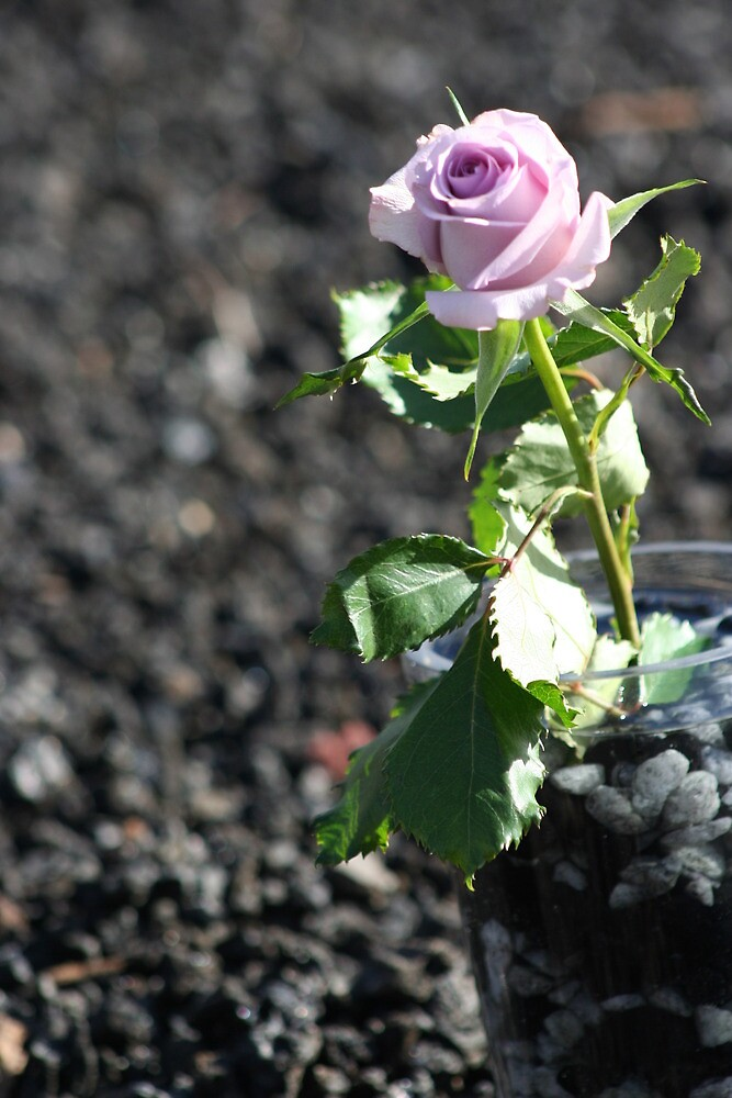 Purple Rose in Vase & Granite by v-something