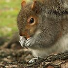 Squirrel  by Helena Bolle