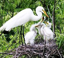 Egret in the Nest with her Babies by Paulette1021