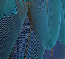 Blue Feathers by Helena Bolle