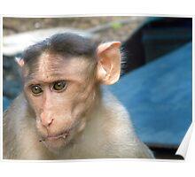 Sad Monkey Poster