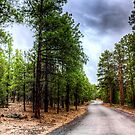 The road through the forest by Mike Olbinski