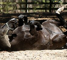 Dark Brown Horse Lying Down by Paulette1021