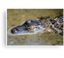 American Alligator Baby Canvas Print