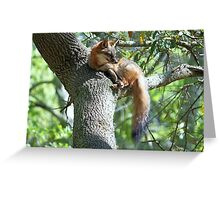 Fox lying in a Tree Greeting Card