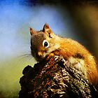 Baby Squirrel 2 by Teresa Zieba