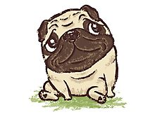 Pug that relaxes Photographic Print