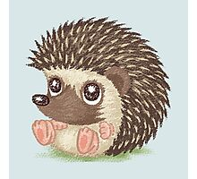 Round hedgehog Photographic Print