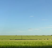 Green barley on Hampshire Downs, southern England (panoramic, so best viewed large) by Philip Mitchell