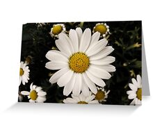 The Perfect Daisy Greeting Card