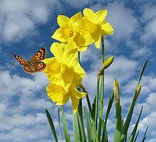 Copper Butterfly with Daffodils  by MHen