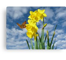 Copper Butterfly with Daffodils  Canvas Print