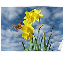 Copper Butterfly with Daffodils  Poster