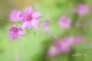 Im the garden 5 by aMOONy