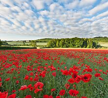 Poppy Field V by Chris Tarling