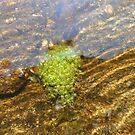 Plants Under Water by MaeBelle