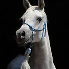 Arabian horse low key by avdw