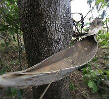 A Boat in a Tree by AlexKokas