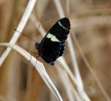 Cockrell Butterfly Sticker