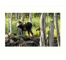 Bull Moose & Little Buddy Art Print