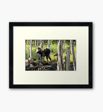 Bull Moose & Little Buddy Framed Print