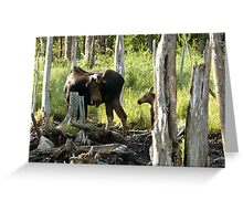 Bull Moose & Little Buddy Greeting Card
