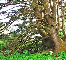 I love this tree at Cape Perpetua, outside of Coos Bay, Oregon by trueblvr